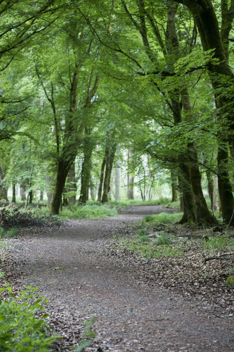 Portumna Forest Park, Portumna